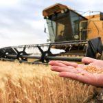 مصر تشتري 2.86 مليون طن من القمح المحلي منذ بداية موسم الحصاد