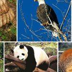 شاهد| مليون فصيلة من الحيوانات معرضة للانقراض