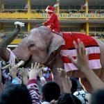 الأفيال تلعب دور بابا نويل وتوزع الهدايا بمدرسة في تايلاند