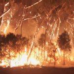 فرق الإطفاء تكافح حرائق الغابات في غرب أمريكا والدخان يصل إلى أوروبا