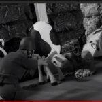 «18 بقرة مطلوبة» من قوات الاحتلال.. قصة تختصر قصة وطن