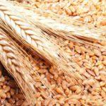 وزارة التموين: مخزون مصر الإستراتيجي من القمح يكفي 5.5 شهر