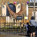بسبب كورونا..مساعي لجمع تبرعات في لندن لحماية الحيوانات بعد إغلاق حدائقهم