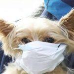 كلب في الحجر الصحي يثير أسئلة حول انتقال فيروس كورونا للحيوانات