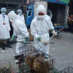 أمريكا تطالب الصين بإغلاق أسواق بيع الحيوانات البرية للأبد