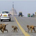 الحيوانات البرية تستغل أزمة كورونا للتجول بحرية وسط المدن