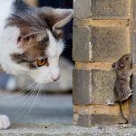 دراسة حديثة تكشف تاريخ انتشار الفئران في العالم