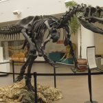 العثور على حفرية لآخر ديناصور مفترس على الكوكب في الأرجنتين