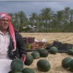 أزمات تواجه الإنتاج الزراعي في غزة.. حصار ووباء