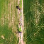 أستراليا ترفع توقعاتها لمحصول القمح بنسبة 25% بعد أمطار غزيرة
