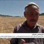 الجزائر.. المزارعون يطالبون الحكومة بدعم زراعة القمح