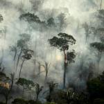 حرائق غابات الأمازون تسجل قفزة.. وخبراء يحذرون من دمار هائل