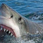 أسترالي ينجح في انقاذ زوجته من فكي سمكة قرش