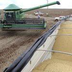 السعودية تطرح مناقصة لشراء 540 ألف طن من الشعير