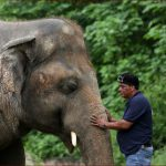 أغاني فرانك سيناترا قد تنقذ الفيل كافان في باكستان