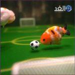 أسماك صينية تمارس كرة القدم