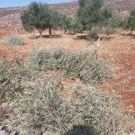 الاحتلال يقمع فعالية لزراعة الأشجار جنوب نابلس