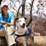 الكلب «بير» يقود جهود إنقاذ الكوالا من حرائق الغابات الأسترالية