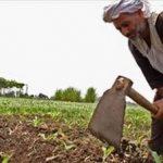 بمناسبة عيده الـ68.. وزير الزراعة: الفلاح له دور هام في تحقيق الأمن الغذائي