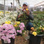 الفلسطينيون يزرعون الورود في مناطق «C» المهددة بالمصادرة في الضفة الغربية