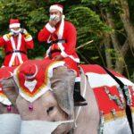 بابا نويل يوزع الكمامات من على ظهر فيل