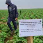 قوات الاحتلال تهدد الفلسطينيين لمنع الزراعة على حدود غزة