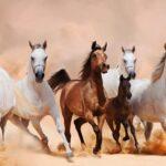 تأسيس أول كلية متخصصة للخيول في الإمارات