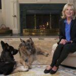 للتوعية من انتشار كورونا.. جيل بايدن تظهر بصحبة كلبيها