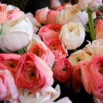 هل الورود ضارة بالبيئة في باريس مدينة الحب؟