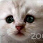 فيديو| فلتر قطة يضع محاميا في موقف محرج.. فما القصة؟