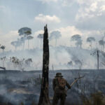 تقارير: البشر تسببوا في تدمير ثلثي الغابات المطيرة في العالم