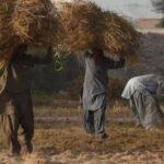خطوة نحو التقارب.. باكستان تسمح بواردات من الهند