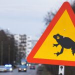من أجل الضفادع.. إستونيا تغلق طريقا رئيسيا