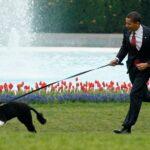 رحيل «بو» كلب عائلة أوباما الوفي