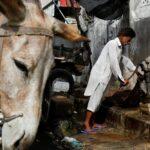 في باكستان.. السقاؤون يروون ظمأ الصائمين لكنهم يخشون كساد تجارتهم