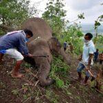 صاعقة تقتل 18 فيلا في الهند