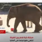 مباراة لكرة القدم بين الفيلة في ألمانيا.. كيف ذلك؟