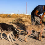الحيوانات تدفع أيضا ثمن النزاع في غزة