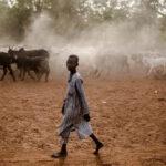 88 قتيلا في هجوم لصوص الماشية على قرى في نيجيريا
