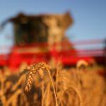 هيئة رقابية: روسيا ترسل 30 ألف طن من القمح للجزائر