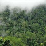 دراسة جديدة: غابات الأمازون أصبحت مصدرا لثاني أكسيد الكربون