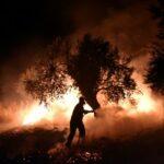 مدير مركز المخاطر: السيطرة على حريق بغابة سوكنا المغربية