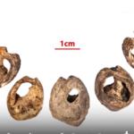 عمرها 150 ألف عام.. العثور على أقدم قطعة مجوهرات في العالم