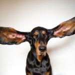 موسوعة جينيس 2022 تتضمن أطول مراهق وأطول أذنين لكلب